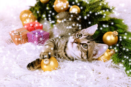 カーペットの上のクリスマスの装飾と子猫