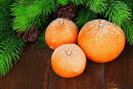 Ripe frosted tangerines with fir branch on wooden background photo