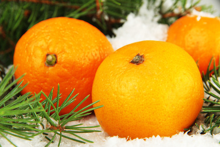 Ripe tangerines with fir branch in snow close up photo