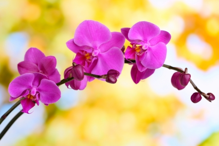saturated color: Gentle beautiful orchid on natural background