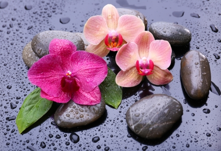 Composition with beautiful blooming orchid with water drops and spa stones, on  gray background photo