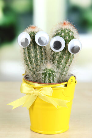 Funny cactus with eyes in bright pail on wooden windowsill photo