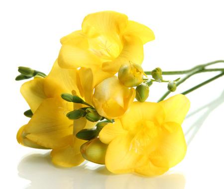 Beautiful bouquet of freesias, isolated on white Zdjęcie Seryjne