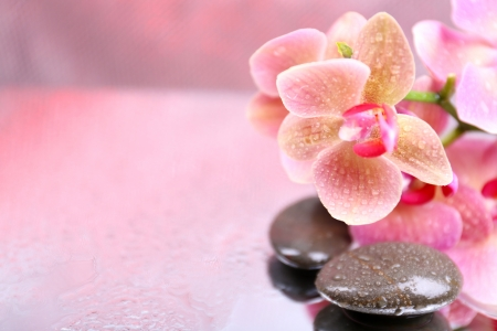 Composition with beautiful blooming orchid with water drops and spa stones, on light color background photo
