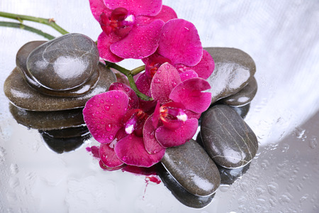 Composition with beautiful blooming orchid with water drops and spa stones, on light color  photo