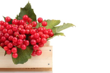 red berries of viburnum in wooden box isolated on white photo