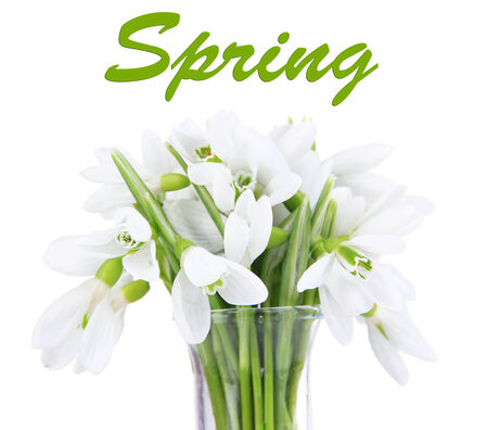 Beautiful snowdrops in vase, isolated on white photo