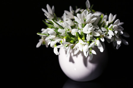 Beautiful snowdrops in vase, isolated on black photo