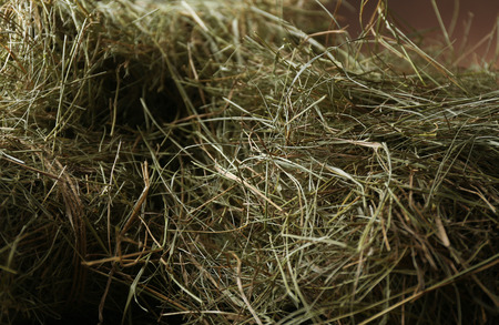 Hay, close up photo