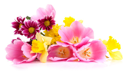 Beautiful flowers isolated on white photo