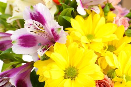 Beautiful flowers close up photo
