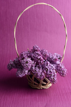 Beautiful lilac flowers in wicker basket on purple background photo
