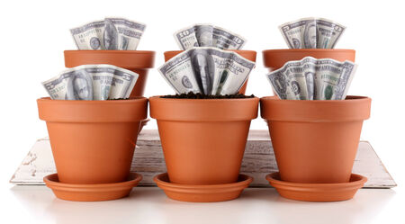 Business concept: growing money in the flowerpots, isolated on white photo