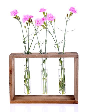 Beautiful summer flowers in vases, isolated on white photo