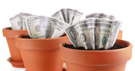 Business concept: growing money in the flowerpots, isolated on white