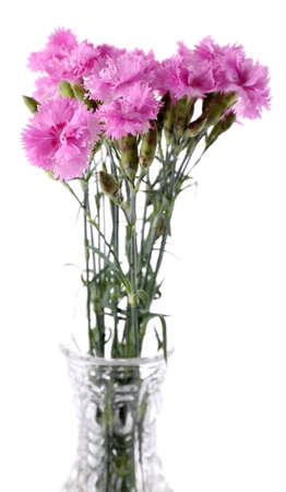 Beautiful summer flowers in vase, isolated on white photo