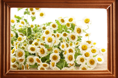 Beautiful wild flowers in wooden frame, close up