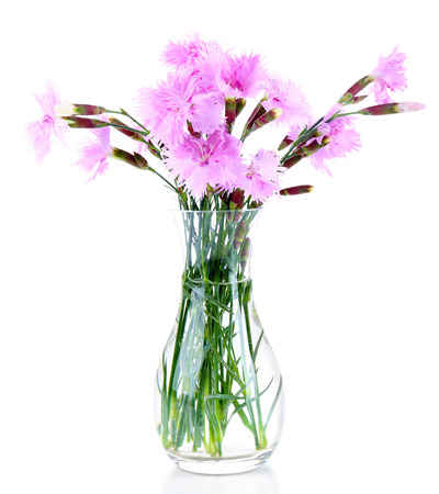 Beautiful lilac flowers in vase isolated on white photo