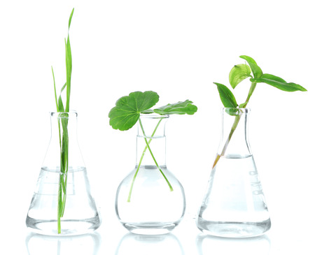 scientific experiment: Plants in test tubes, isolated on white