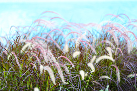 spikelets: Spikelets in field, close-up