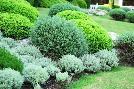 Belles buissons luxuriants dans le jardin Banque d'images