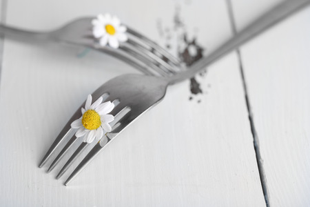 Forks with daisy flowers, on wooden background  photo