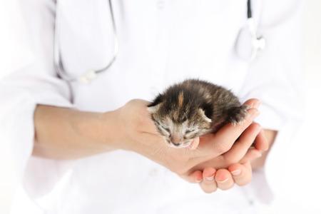 Veterinarian  with kitten, close-up photo