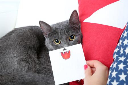 Grey cat on sofa closeup photo