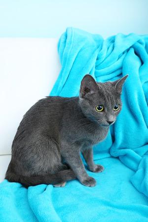 blue blanket: Cat on blue blanket on light background