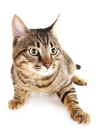 Cat isolé sur blanc