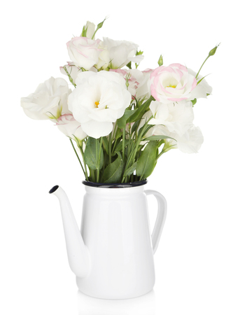 Beautiful eustoma flowers in teapot, isolated on white photo