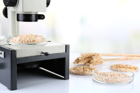 food testing: Microbiological testing for food quality at biochemistry laboratory