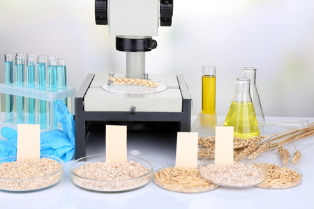 Microbiological testing for food quality at biochemistry laboratory photo