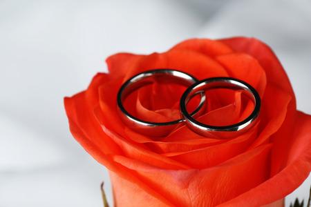 anillos de matrimonio: Anillos de bodas en ramo de la boda, primer plano, la luz de fondo