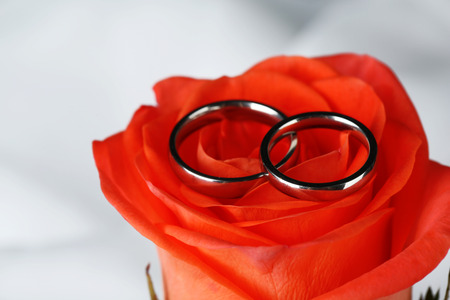 wedding rings: Wedding rings on wedding bouquet, close-up, on light background