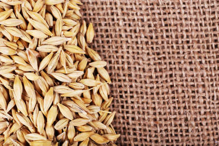 sackcloth: Oats on sackcloth background