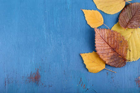 fall trees: Yellow leaves on blue wooden background