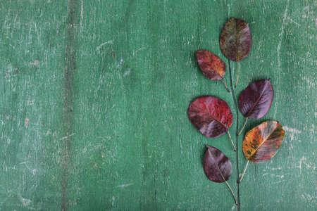 dark red: Dark red leaves on green wooden background