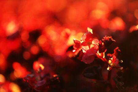 suburbia: Blooming bush, close-up Stock Photo