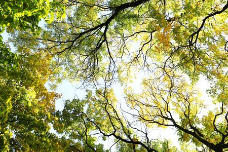twigs: Beautiful autumn tree twigs