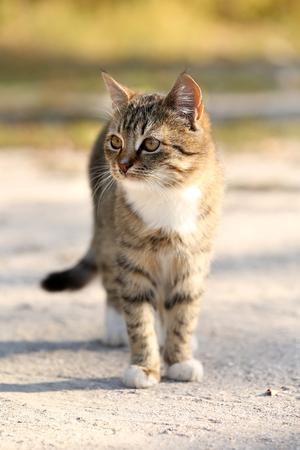 trusting: Cat outdoors