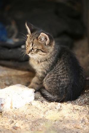 trusting: Kitten outdoors