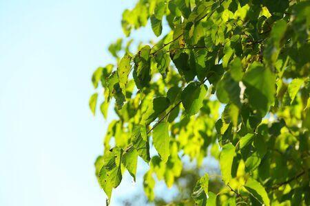 twigs: Beautiful tree twigs