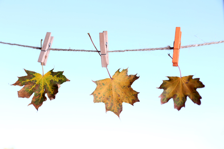 clothespeg: Leaves hanging on rope on natural background