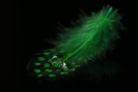 waft: Beautiful feather with water drop on black background Stock Photo