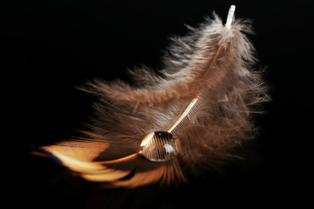Beautiful feather with water drop on black background Фото со стока