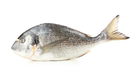 fish isolated: Fresh dorado fish isolated on white Stock Photo
