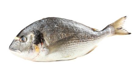dorado fish: Fresh dorado fish isolated on white Stock Photo