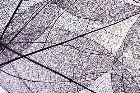 装飾的なスケルトンの葉背景