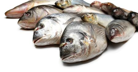 fish isolated: Fresh catch of fish isolated on white Stock Photo
